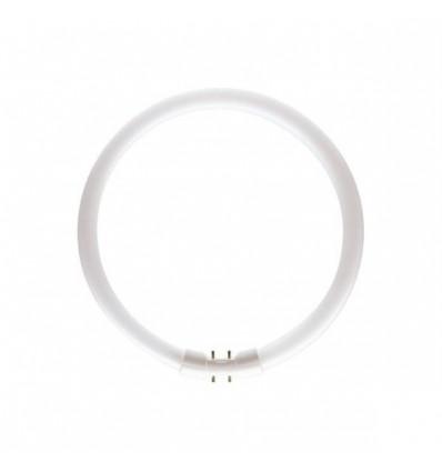 MASTER TL5 Circular 55W/840 1CT