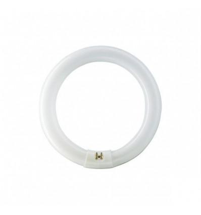 MASTER TL-E Circular Super 80 22W/865 1CT